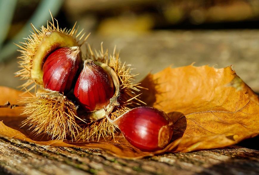 История на сладките кестени